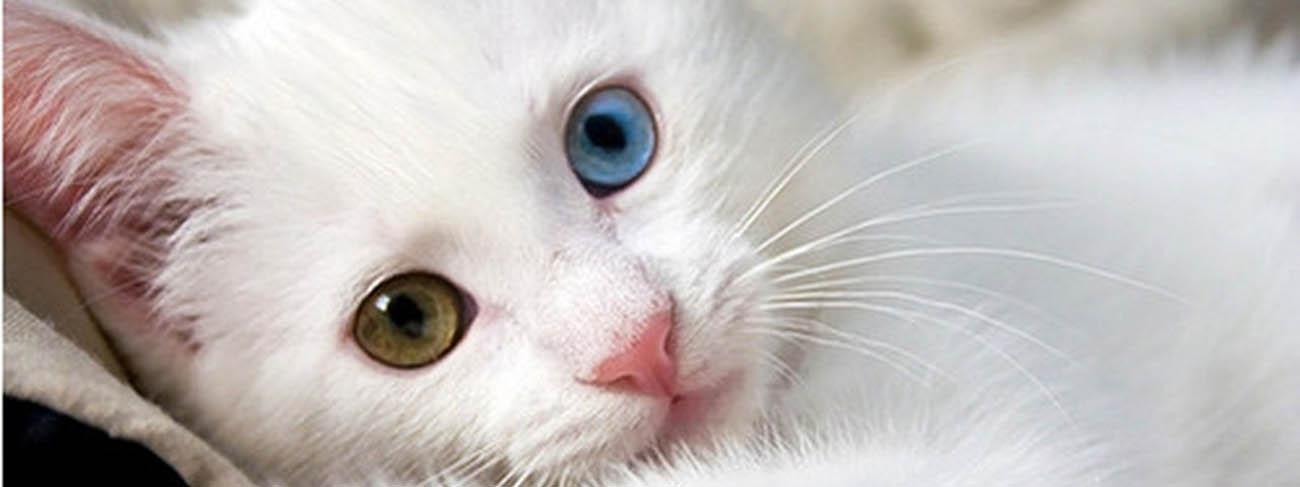 خانه گربه های وان ترکیه ( آدرس + نقشه)