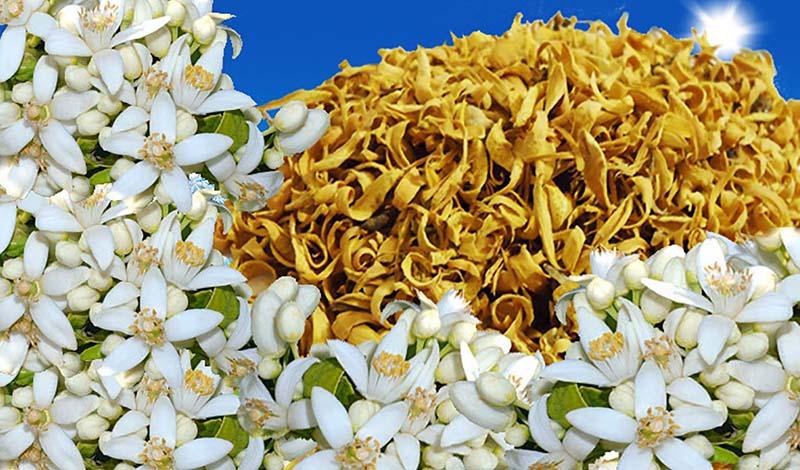 بهار نارنج شیراز